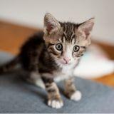 Choisir un prénom pour son chat : les noms commençant par L les plus populaires