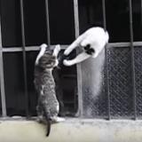 Quand une maman chat vole au secours de son chaton bloqué… (Vidéo du jour)