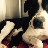 Un chienne errante sauve un chaton nouveau-né et devient sa maman d'adoption