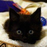 Ce chaton quadriplégique a surpris tout le monde en marchant, 5 ans plus tard…
