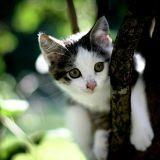 Un chaton coincé en haut d'un arbre pendant 6 jours !