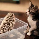 10 chats et leurs meilleurs amis aussi improbables qu'adorables (Vidéos)
