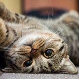 Top 10 des noms originaux de chats femelles en N pour 2017