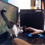 Jouer à League of Legends avec un chaton ? Mauvaise idée !  (Vidéo du jour)