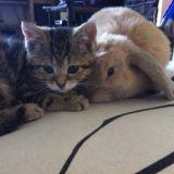 Un lapin et un chaton aveugle deviennent inséparables (Vidéo)