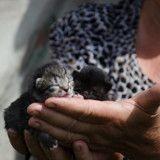 Vente de chats et de chiens par les particuliers :ce qui va changer au 1er janvier 2016