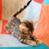 Adopter un chaton quand on travaille toute la journée, est-ce une bonne idée ?