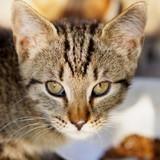 Semaine du chat : Royal Canin lance une opération solidaire pour aider les refuges impactés par le Covid-19