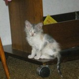 Elle adopte un chaton, quand il grandit tout le monde est sans voix