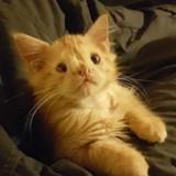 Ce chaton jugé trop « moche » pour être aimé a prouvé que tout le monde avait tort