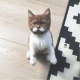 Ce chat a une moustache absolument parfaite qui fait chavirer tous les cœurs
