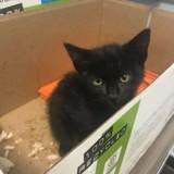 Un petit chat entre dans le commissariat, ce qu'il fait ensuite va tout changer