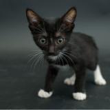 Elle photographie des chats noirs, ces oubliés des refuges victimes de la superstition
