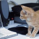 En réponse aux menaces terroristes, les Belges envoient des chatons !