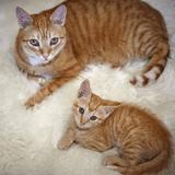 10 chatons qui font absolument TOUT comme leur maman !