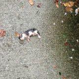 Elle voit un petit chat gisant sous la pluie, se précipite vers lui et comprend qu'il y a urgence