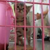 Quand des chatons abandonnés trouvent refuge en prison