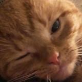 Elle sauve un chaton et l'emmène chez le vétérinaire : ce qu'il découvre est un choc…