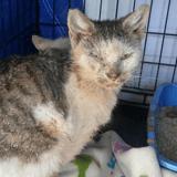 Trouvés tremblants de froid et dans un sale état, ces deux chatons ont eu droit à leur miracle !