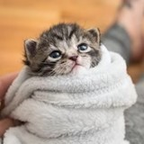 Chaton abandonné dans une boite de mouchoirs : quand elle le lave, elle réalise son énorme erreur