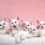 Séparation des fratries chez le chat : comment bien réussir le sevrage ?