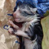 L'impressionnant sauvetage d'un chaton gisant sur la route dans le froid…