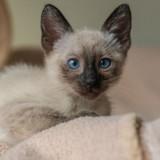 Ils demandent au vétérinaire d'euthanasier leur chaton pour une raison absolument scandaleuse