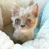 Elle trouve une petite chatte dans les buissons, l'annonce du vétérinaire lui donne les larmes aux yeux