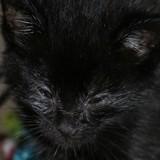 Elle soigne deux chatons abandonnés, quand ils ouvrent les yeux elle a une grosse surprise