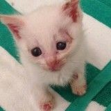Ce chaton devait être euthanasié… Deux ans plus tard, voici ce qu'il est devenu