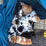 Devant le magasin, elle découvre une cage avec 21 chats : une lettre bouleversante a été laissée avec...