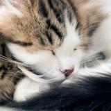 Elle abandonne 35 chatons dans la forêt et est condamnée à une peine que personne n'oubliera