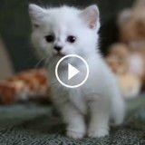Trop mignons ! Ces adorables chatons blancs qui jouent vont vous faire craquer ! (Vidéo du jour)