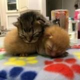 Retrouvés blottis l'un contre l'autre dans un camion, ces adorables chatons sont inséparables