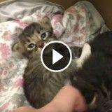 Cette chatte vient de mettre au monde 6 adorables chatons ! (Vidéo du jour)