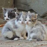 """Le député Loïc Dombreval estime qu'""""il faut stériliser tous les chats qui ne sont pas destinés à la reproduction"""""""