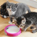 La recette pour chat de la semaine : comment réaliser du lait maternisé