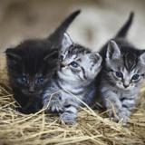 Au Royaume-Uni, un tueur en série de chats condamné à 5 ans de prison