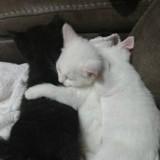 Elle accepte d'adopter deux chatons, en les découvrant elle prend une décision qui va tout changer