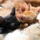 Comment s'occuper d'un chaton non sevré ?