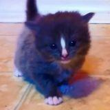 Quand des chatons apprennent à marcher (Vidéo du jour)