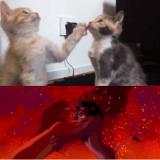 Quand deux chatons rejouent le Roi Lion (Vidéo du jour)