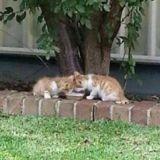 Elle trouve deux adorables chatons et ne s'attendait pas à ce qu'elle allait découvrir