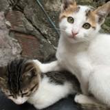 Elle abandonne des chatons dans un sac : la PETA lui propose un marché