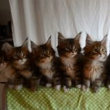Les adorables chatons synchronisés (Vidéo du jour)