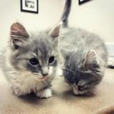 Elle se rend dans un refuge pour adopter deux chatons, mais rien ne se passe comme prévu