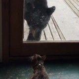 Quand un chat féroce met… un ours en fuite !
