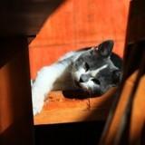 Votre chat perd ses poils et ça vous inquiète ? Un vétérinaire vous répond !