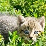 Probablement porteur de la rage, un chaton est activement recherché