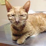 Découvrez l'incroyable transformation de Claus, le chat malade sauvé par l'amour